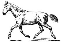 horse-clipart-3