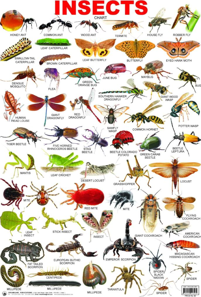 39-insects
